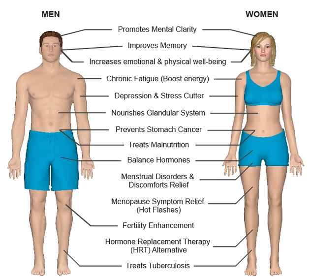Benifits Of Maca Root For Men And Women Sexual Health By