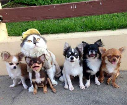 El gato Richie y sus 7 hermanos chihuahuas