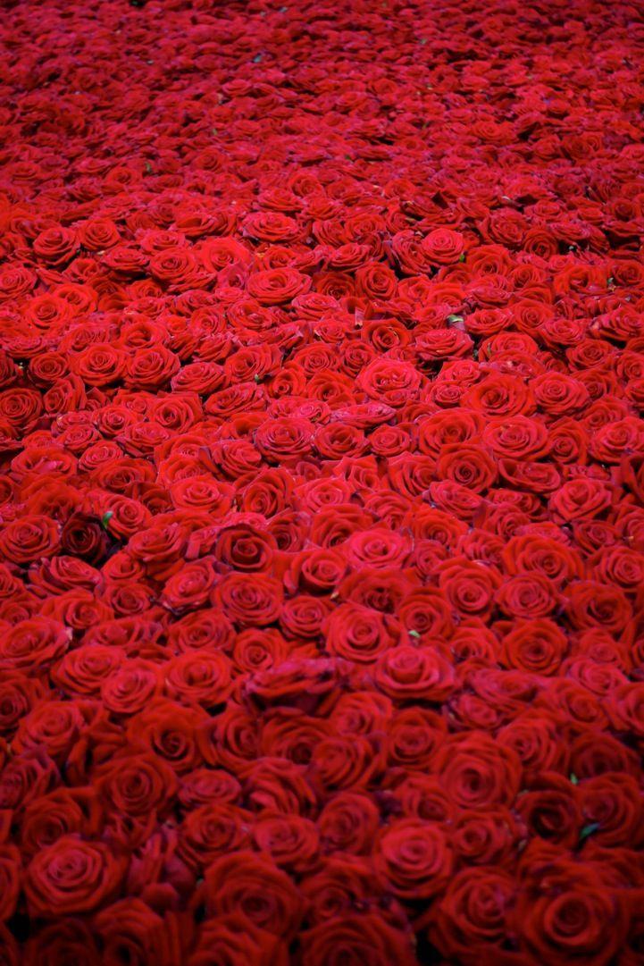 Картинки для, миллион роз картинки красивые