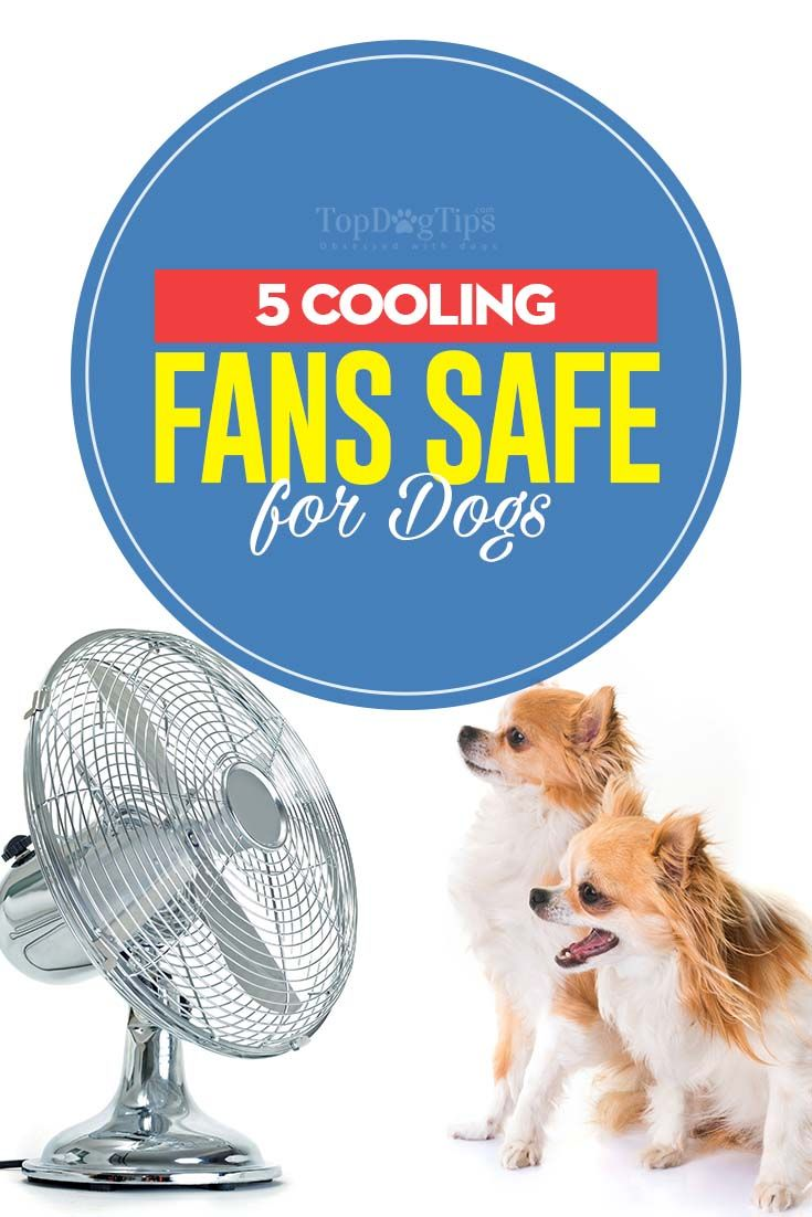 5 Indoor Cooling Fans That Re Safe For Dogs Dog Training