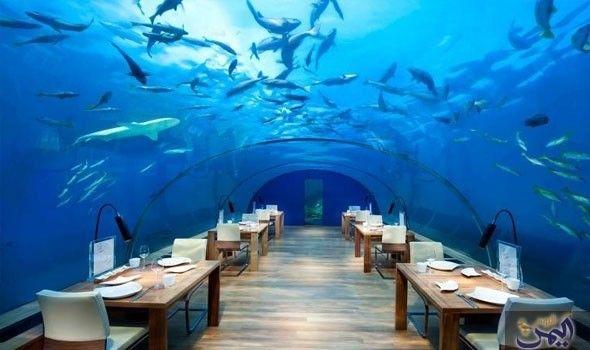 جزيرة Maldives Honeymoon Underwater Restaurant Maldives