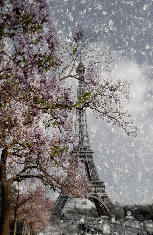 Printemps Parisienne Photograph