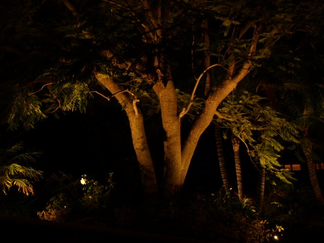 Landscape Tree Lighting | Wedding Ideas | Pinterest | Alberi, Illuminazione  Di Albero E Illuminazione