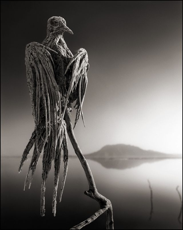 Stumbled upon this today online: Lake Natron in Northern Tanzania turns animals that touch it into stone due to the high alkaline levels in the water.  These photos by Nick Brandt are unbelievable! Be sure to check them out!
