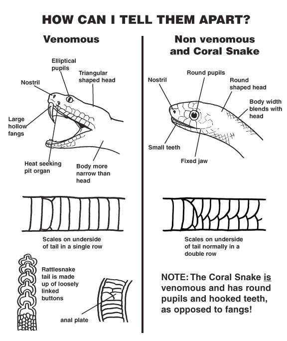 The 26 Best Non Venomous Snakes Images On Pinterest Missouri