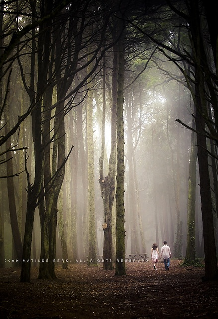 gorgeous light.: Picture, Photo Ideas, Walk In, Wedding Photo, Forest, Couple, Engagement Shoot