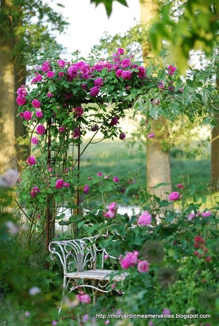 Best 1000 gazebos and or arbors images on pinterest other gardens arbors and garden gates - Climbing rose trellis ...