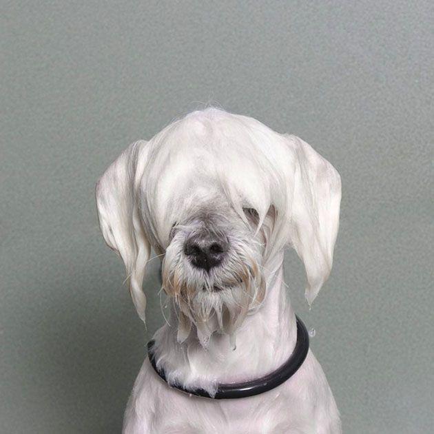 Wet Dog: Divertida Serie de Retratos de Perros Mojados por Sophie Gamand | FuriaMag | Arts Magazine