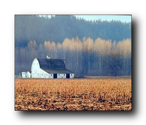 Wow! This landscape scenery art print poster will add a beautiful charm and a sense of natural beauty into your home. This poster captures the image of an old barn field and trees behind the barn are sure to catch every eye towards it. This scenery art print wall poster will be an eye-catching addition to any wall. Perfect for the nature lover person. Get up and buy this product for its durable quality and high degree of color accuracy.