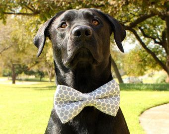 Dog Bow Tie Dog Bowtie Navy Polka Dot Bow Tie by BullenBeisser