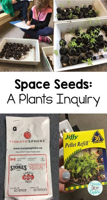 Teaching about Plants: A Science Inquiry about Plants and Outer Space - Create Dream Explore
