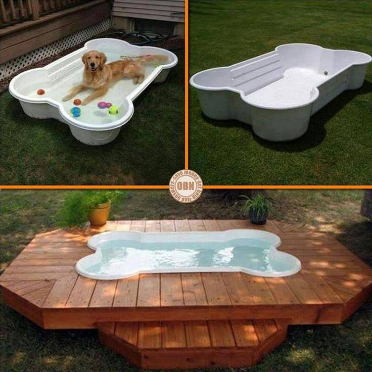 Is this something your pet would love to have? Why not ask them what they think of the idea... on The Owner-Builder Network  http://theownerbuildernetwork.co/wp-content/blogs.dir/1/files/coops-hutches-and-other-pet-accommodation-1/aaaaaarrr-10.jpg