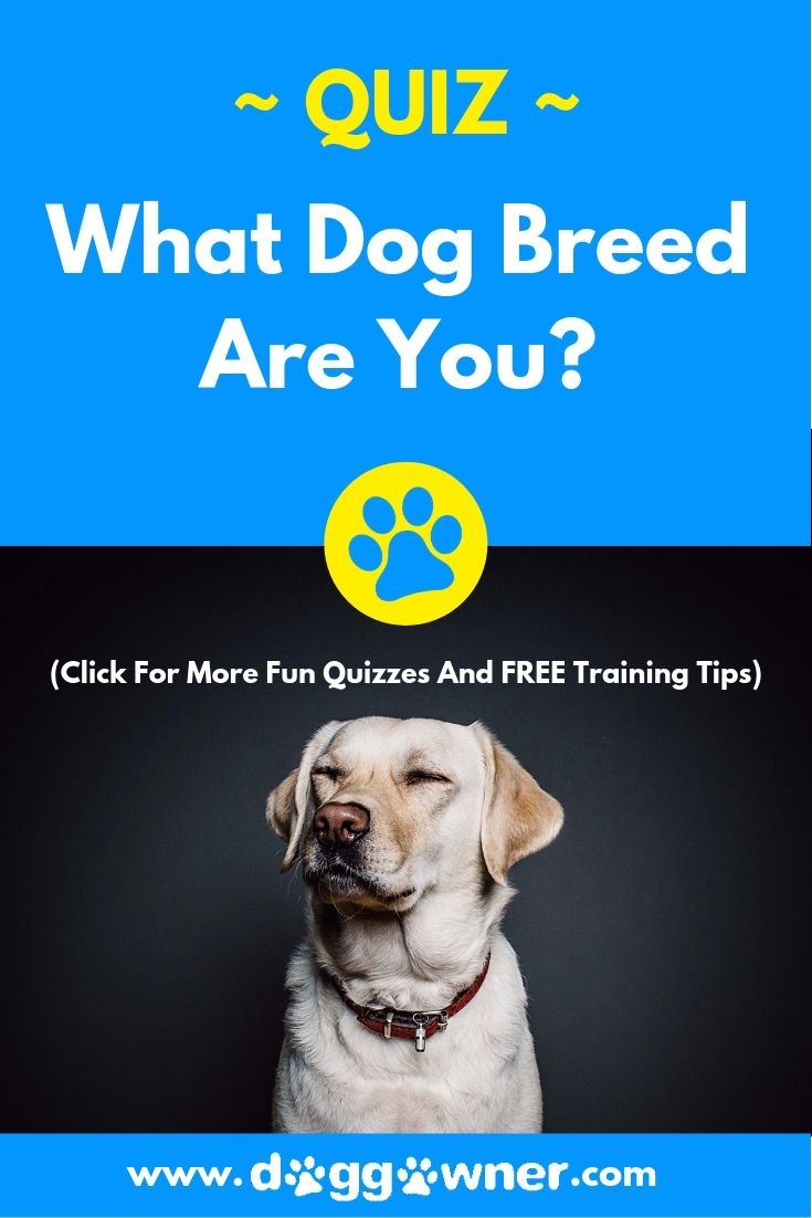 Quiz What Dog Breed Are You Dog Quiz Dog Quizzes Dog Breeds
