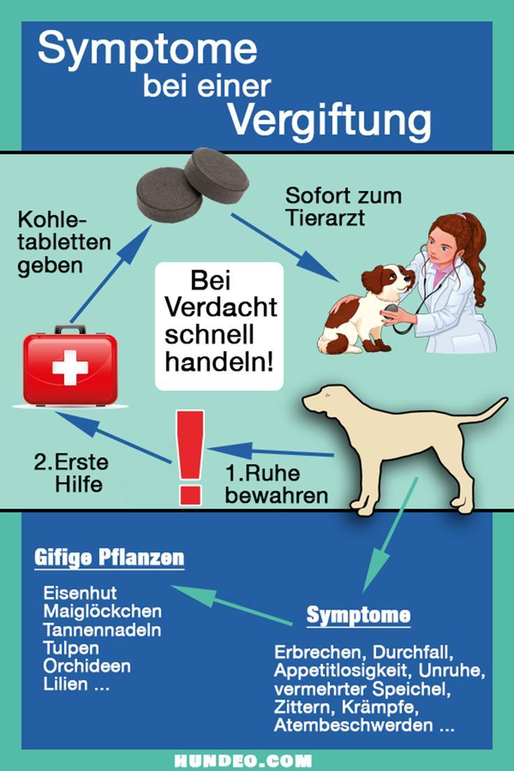 Hunde Vergiftung Symptome
