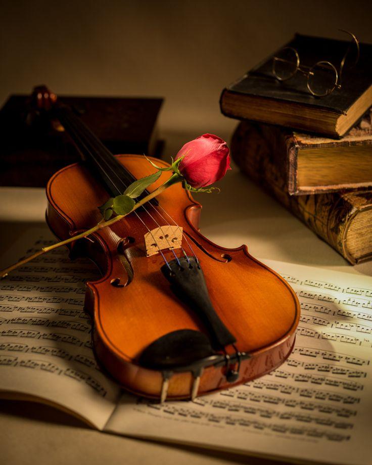 Arts Music Photography: Fotó Hegedű és A Red Rose William Doree On 500px