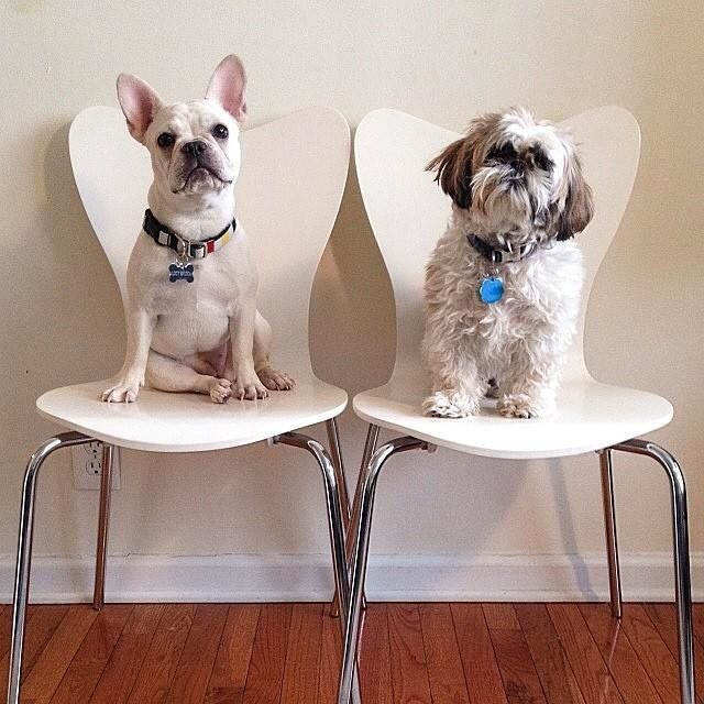 who makes west elm furniture. littlelucygoose shared this awesome doubledose of dogs our scoopback chairs who makes west elm furniture i