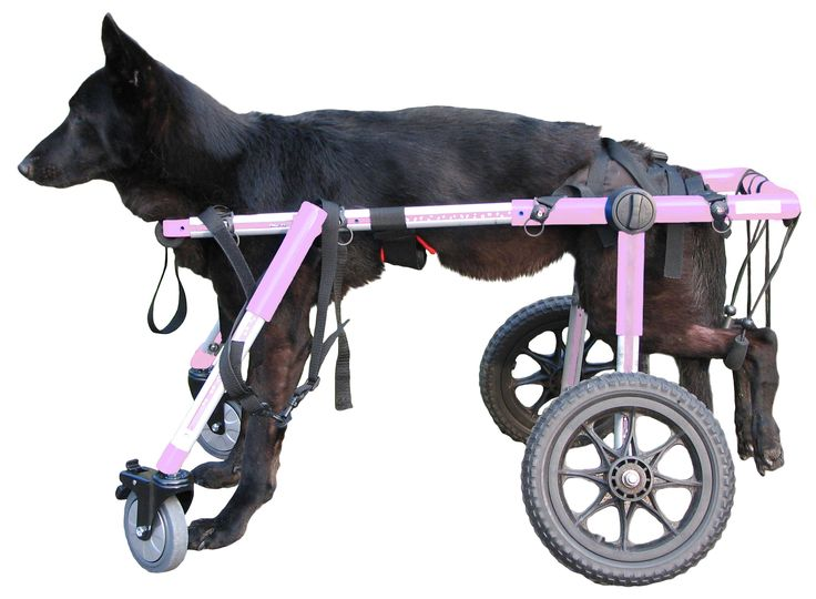Canine walking aids