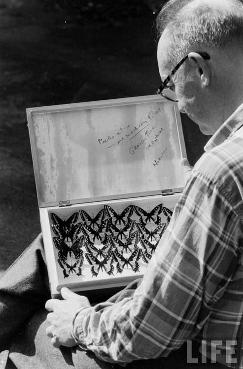 Vladimir Nabokov with butterflies. Photo by Carl Mydans, 1958