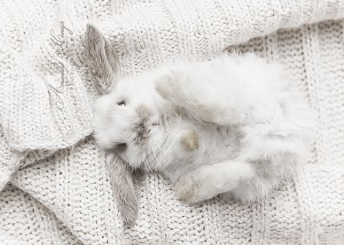 fashion/beauty/lifestyle/modern: Rabbit, Dreamy White, White Spaces, Funny Bunnies, Pet, Easter Bunnies, Baby Bunnies, Baby Animal, Things