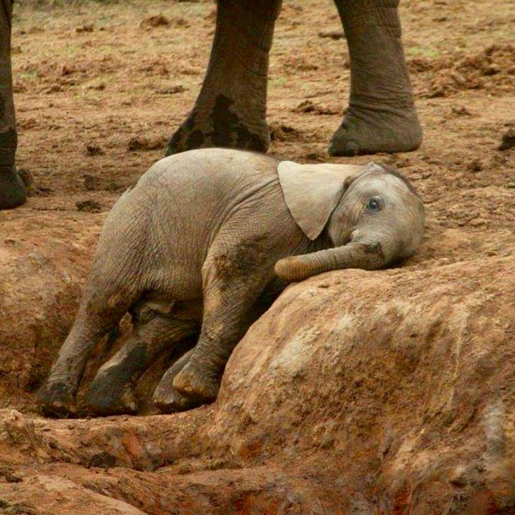 If this resting baby elephant does not make your day, then you and I need to have a conversation! Picture by Ryan Labuschagne