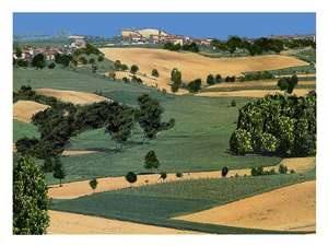 Asti Piemonte Italy - Where Moscato d' Asti is made!!!