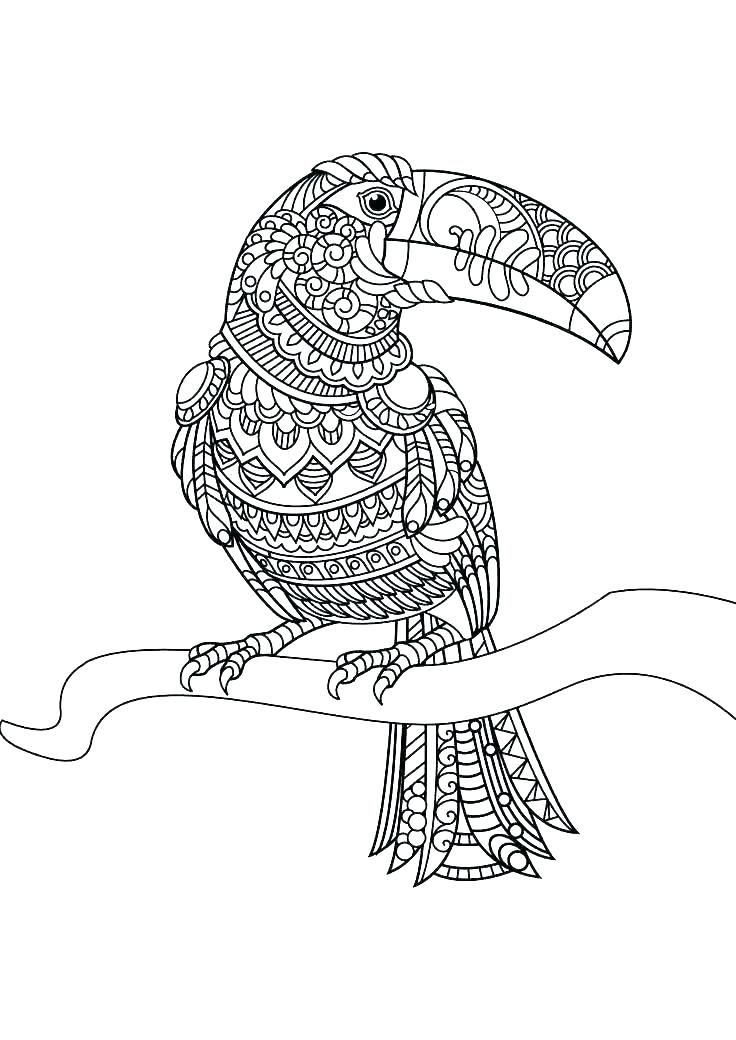 forest animals coloring page native animal colouring pages animal ...