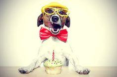Como preparar um bolo de aniversário para cachorro