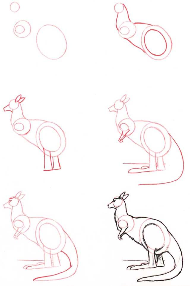 Learn to draw: Kangaroo - Graphic / Illustration - Art Tutorial