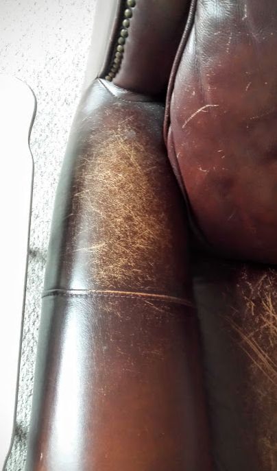 Olive Oil makes leather couch look new again