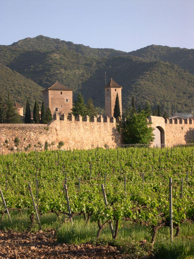 Abadía de Poblet. vinyes. La Conca de Barberà, Catalonia