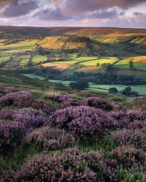 The North York Moors - there's views like this just up the road from Cropton...beautiful!