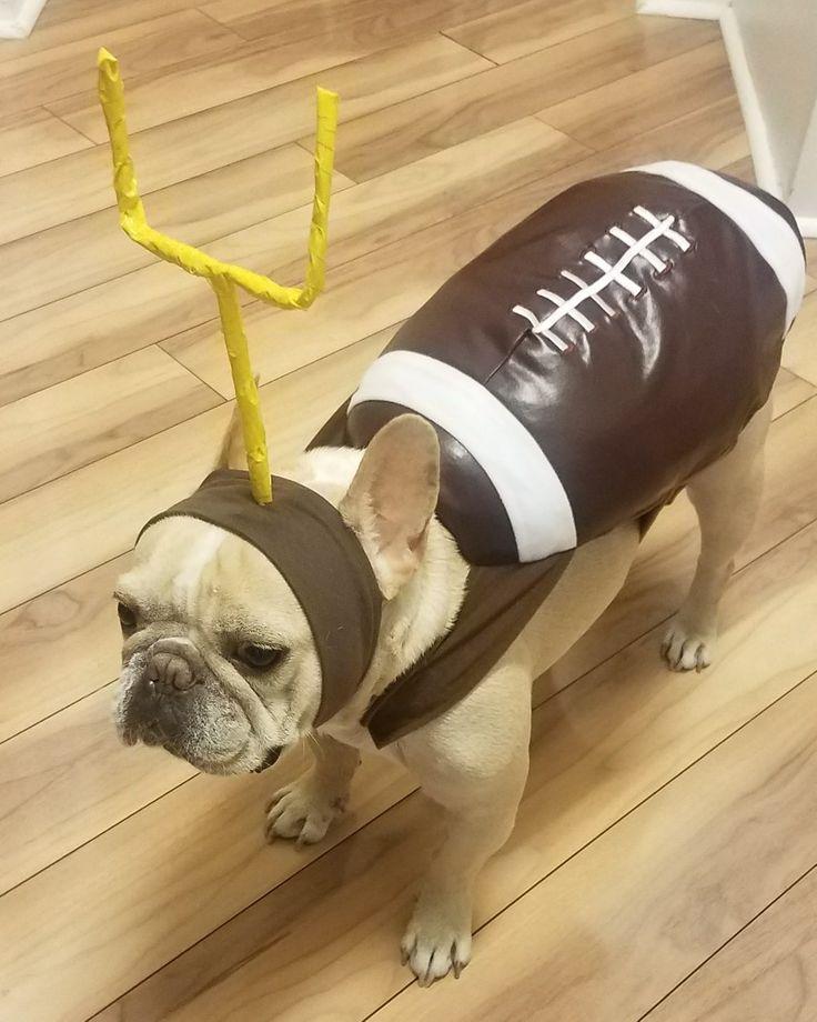 Best 25+ Dog football costume ideas on Pinterest   Cute ...