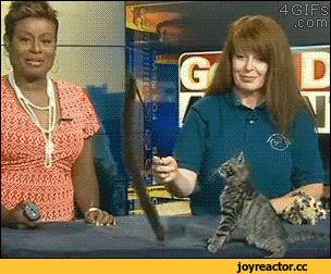 Весёлые анимированные гифки с котами и кошками