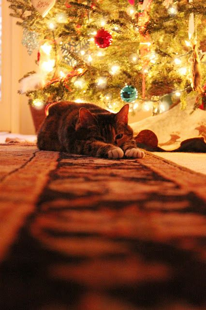 Another angle of the Christmas Cat - @Emily Schoenfeld Schoenfeld Wilson for next christmas with pepe!