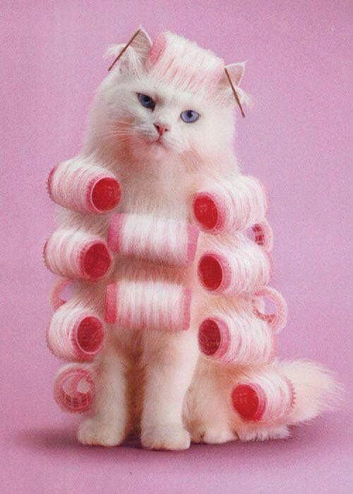 Stylish kitty ready for a new look.lol