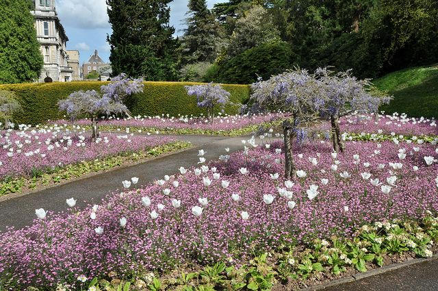Reed Hall Gardens