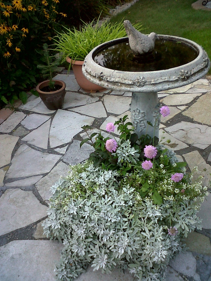 Flagstone Filler Plants : Best images about garden of flagstone on pinterest