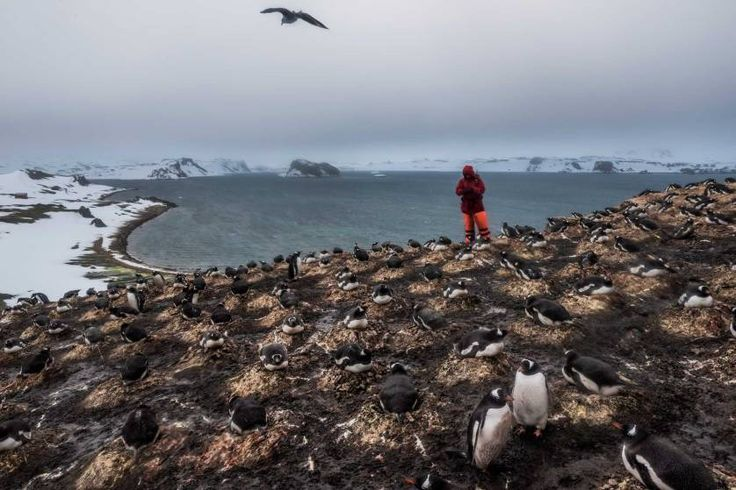 Daily Life, 1st prize stories. A member of a German research team counts the number of penguin species and pairs as part of ongoing research on bird and penguin species in Antarctica; Fildes Bay, Antartica, Dec. 7, 2015.