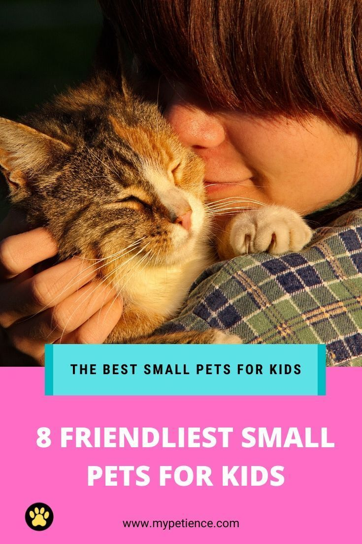 The Best Small Pets For Kids Things You Need To Consider In 2020 Small Pets For Kids Best Small Pets Animals For Kids