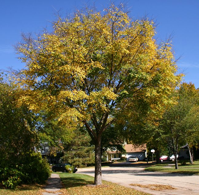 Go by the mailbox on pinterest white oak shade trees and oak tree