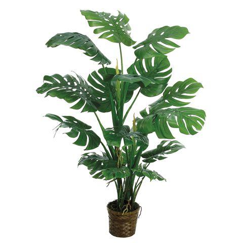 Split Leaf Philodendron Monstera Deliciosa Interiors