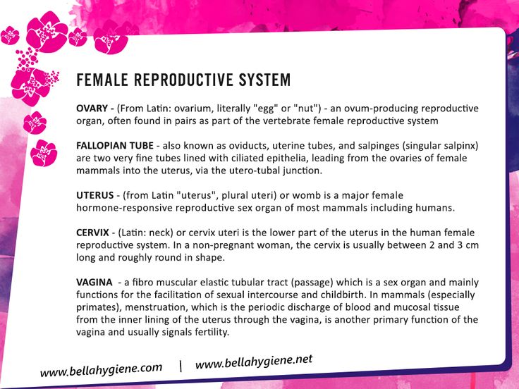 Female reproductive system and its functions..