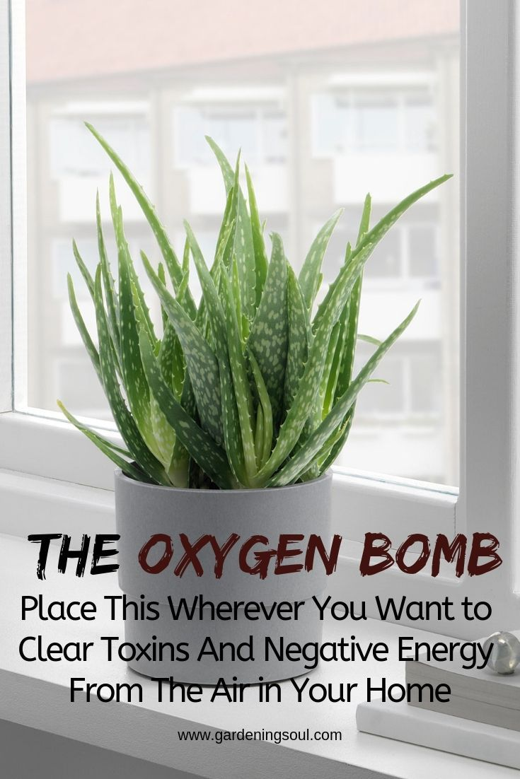 The oxygen bomb: place it wherever you have toxins and negative energy …