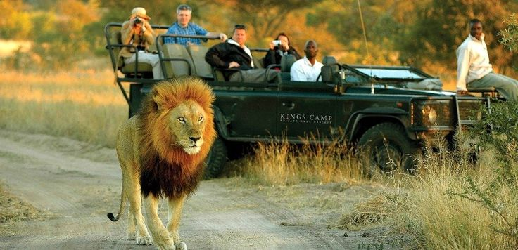 Everything you need for your Safari to the Kruger National Park and the rest of Africa. The best rates for guided Safari Tours and all types of Budget & Luxury Accommodation.