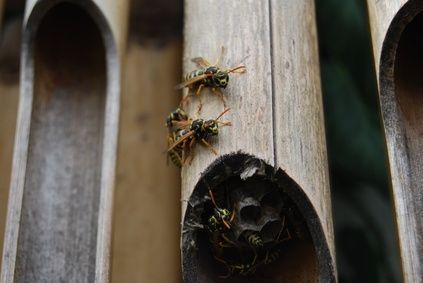 How To Keep Hornets Amp Wasps Away Sprays Carpenter Bee