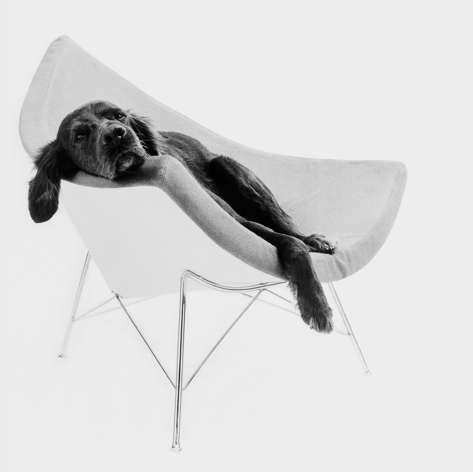 Coconut Chair, George Nelson 1955