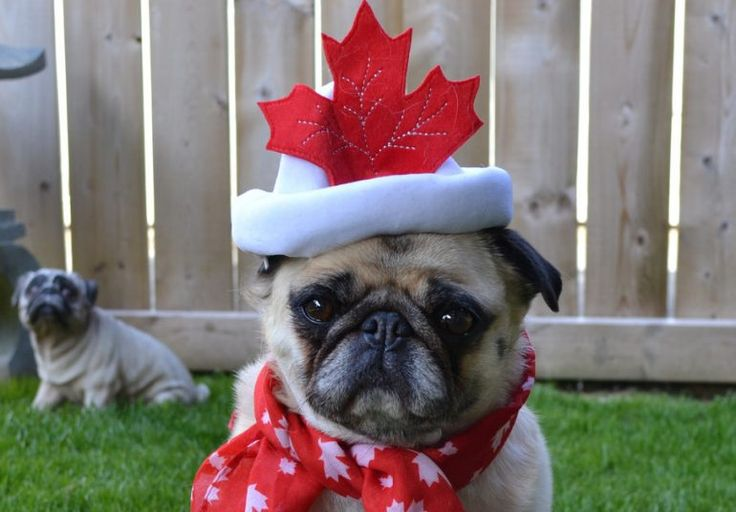 7 Of The Greatest Dog Breeds From Canada, Eh? – AngusPost