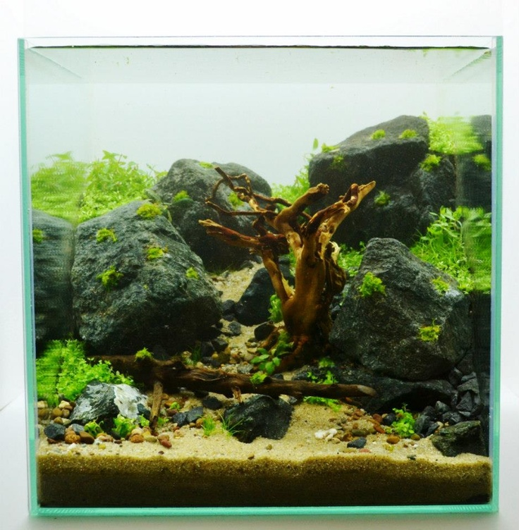 ... aquarium ideas 30cm 12in cube aquascape illusion freshwater aquarium