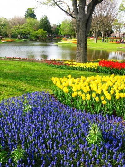 国営昭和記念公園-2 春爛漫・カラフルな花畑 F☆シバザクラも輝いて