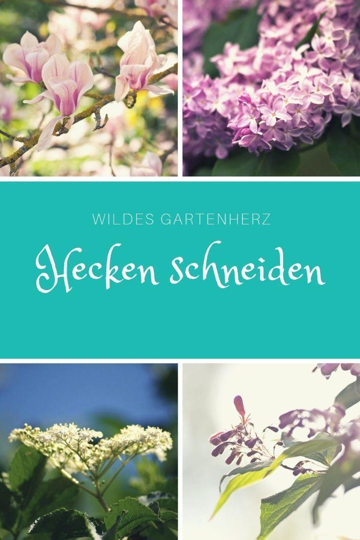 Hecken Schneiden Pflegetipps Pflanzen Unkraut Im Garten Und